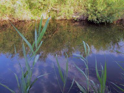 микроречка, заросшая водораслями