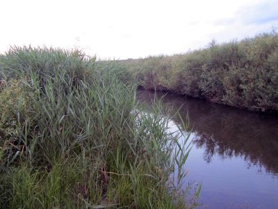 маленькая заросшая тростником речка