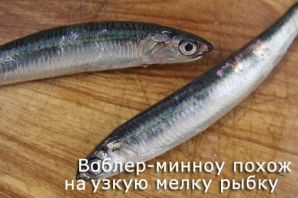 узкая и мелкая рыбка